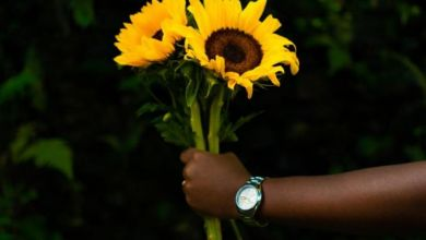 Photo of Sipho The Gift – Bloom EP